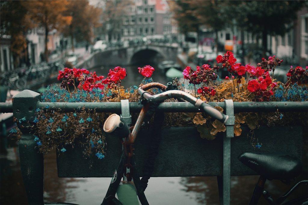 自転車と花と川