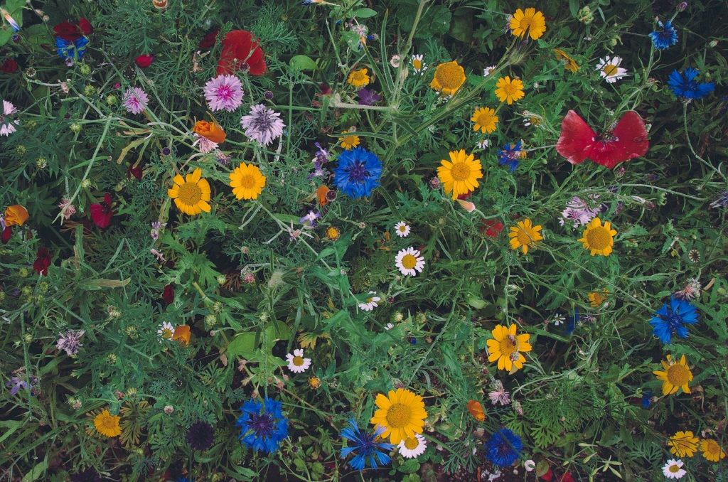 カラフルな花畑