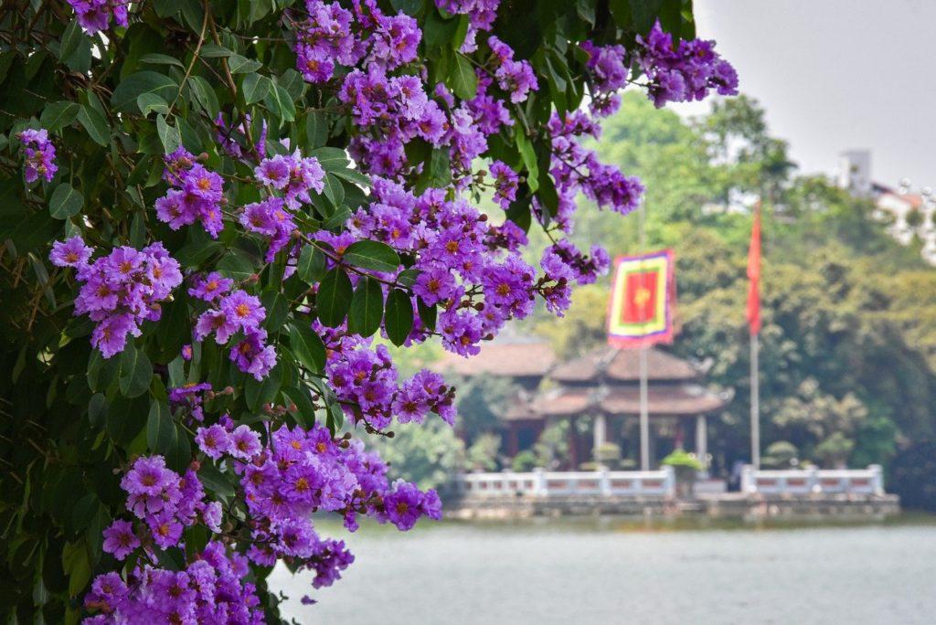 ベトナムの花と景色