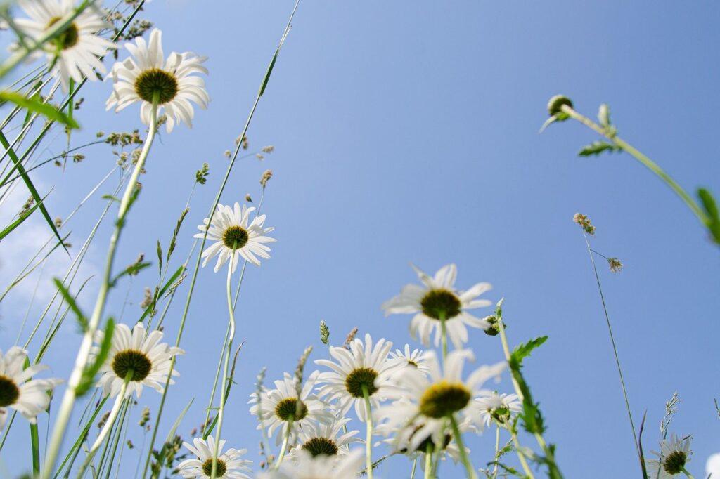 白い花と空