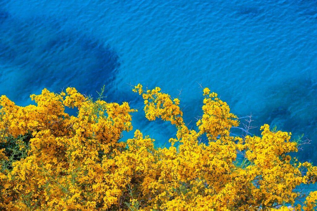 海と黄色い花